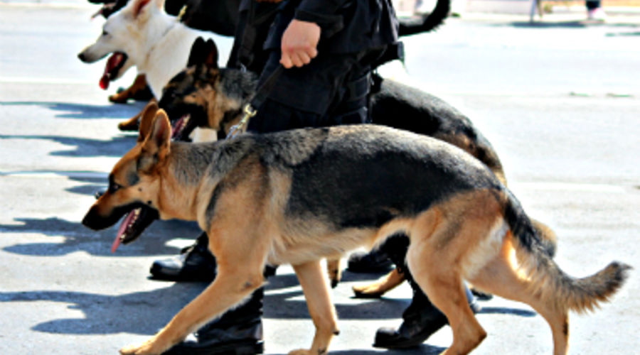 chiens-police-flickrcc-a-g-stumpf