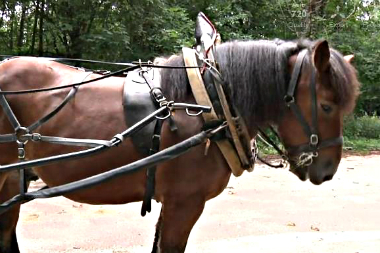 video-ville-paris-meneur-chevaux